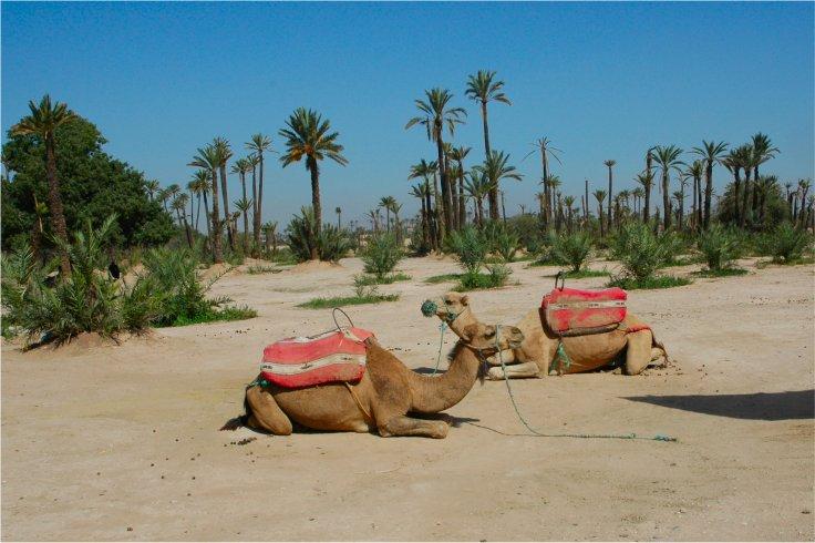 marrakech-surrounds-5230