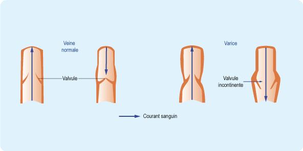 fonction-des-valvules